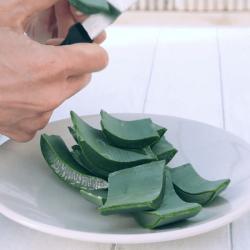 Préparation du jus d'aloe arborescens
