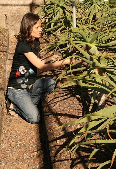 Violaine et la plantation d'aloe arborescens
